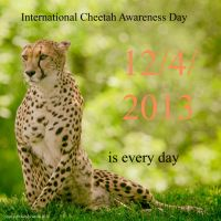 Cheetah Day 2013 by clippercarrillo