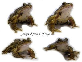 Frog Stock 2 by Meta-Stock
