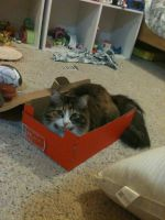 Cat in a Box by TheLegendofEevee