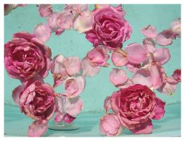 Rose, Rose, Rose, Rose by zasu