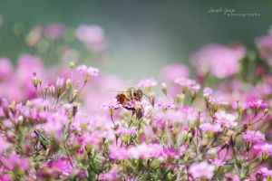.:: Love the little things ::. by Whimsical-Dreams