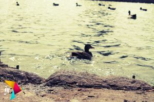 Duck Pond by LaCandida