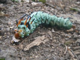 Hickory Horned Devil by Soltice480