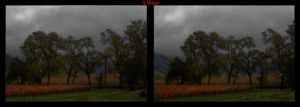 Cross view 3D Cold Day in the California Vineyards by shawnrl61
