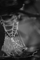 Drops On Spider Web by LisiTisaKi