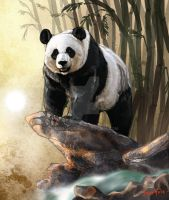.+. Panda Dominion .+. by FionaHsieh