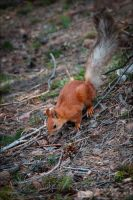 Cute little squirrel by Steph666Irs
