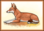 Fikre Laying by Servaline