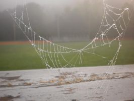 Spider Web 2 by animegrl7979