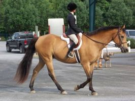 Horse show stock 14 by shush-stock
