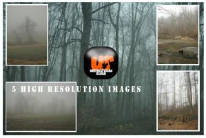 Foggy Treescapes Pack by Unrestricted-Stock
