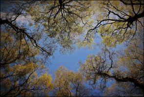 Worms eye view . by 999999999a