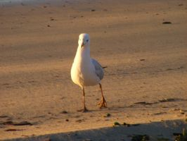 Seagul and Sand by Dontheunsane