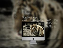 Tigar Wallpaper Pack by ExExic