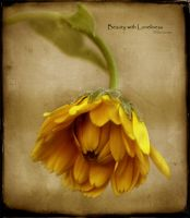 Beauty with Loneliness by ninazdesign