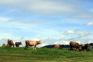 Country Life Bavaria. by johannmetzger
