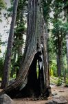 Hollow Wood by sintar