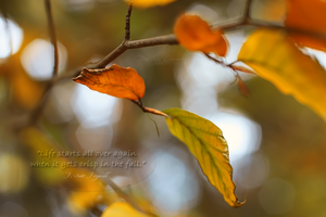 In the Fall by DorotejaC