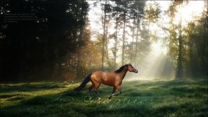 Through the Meadow [premade] by PS-Graphics