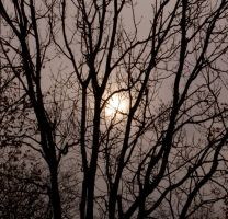 Trees by beckic