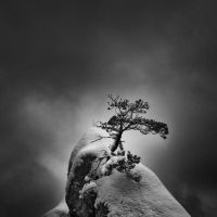 -Bonsai- by Janek-Sedlar