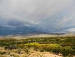 A View of the New Mexico Desert by SharPhotography