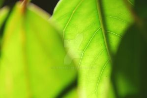 Leaves by Elfedward