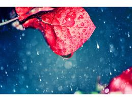 a 'LOVE RAIN'... by mohdfikree