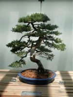 Bonsai... by ShiruKun