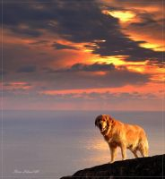 Golden moments by steinliland