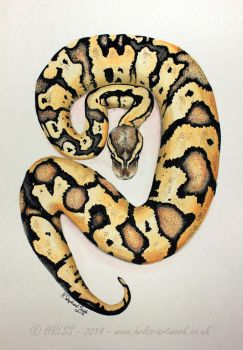 Ball Python  - Watercolour Painting. - FOR SALE. by HRLSS-GeckoTea