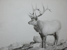 The Elk by Indybreeze