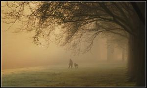 Dogwalking on a misty morning by Esperimenti