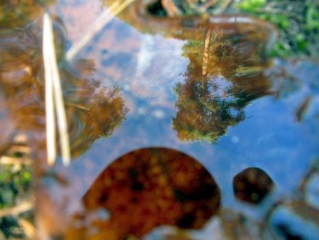 Autumn drop of water by Gabriet