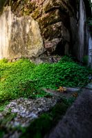 The old garden walls of Munster by arjantje