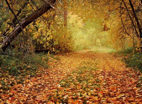 Autumn Path In The Woods by Korolevatumana