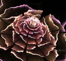 Flower in torn paper by Antares2
