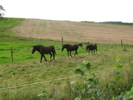 Horses Collection: Grouped 4 by Germanstock