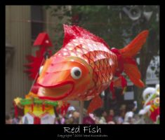 Red Fish by cionia