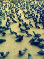 Pigeon Army by Pramin