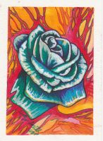 water color rose by lefey23
