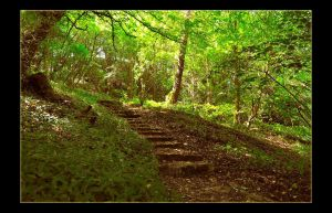 Forest Steps by Forestina-Fotos