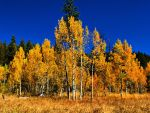 Aspens and sky by MartinGollery
