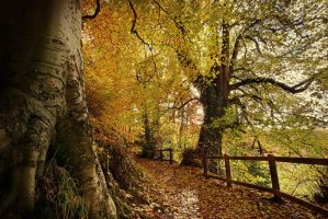 Belvoir Forest Path, Autumn 08 by Gerard1972
