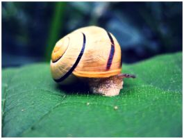 Close-up of a snail by dunkeltoy