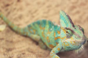 chameleon. by elenasphotography
