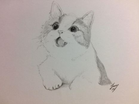 The cat by FJmong