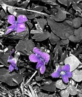 Another Purple Flower...Again by Mymona