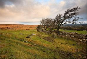 edge of the moor by sassaputzin
