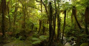 Karamea, Lost forest by partoftime
